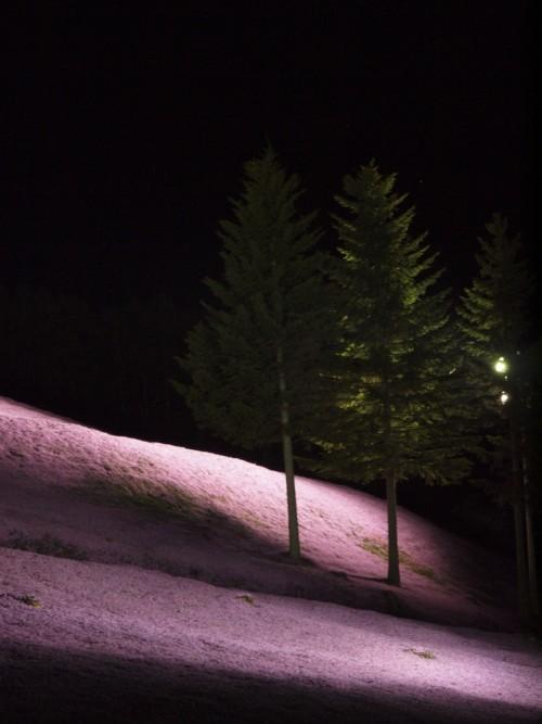 芝桜公園6.jpg